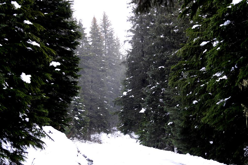 Wintery Road - Girdwood - Alaska - USA