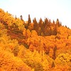 Autumn Photos - Fall Colors - Turnagain Arm - Alaska - USA
