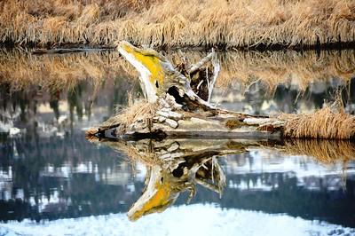 Log Reflection - Potter's Marsh - Anchorage - Alaska - USA