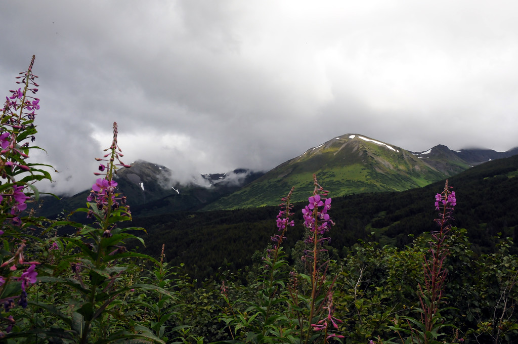 Alaska Travel Photography - Turnagain Pass - Mountains and Fireweed