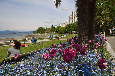 English Bay and its beautiful tulips.  Many people come here to enjoy the beach and harbor.