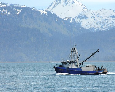 Boat - Fishing Boat - Transportation - Homer Spit - Homer - Kenai Peninsula - Alaska - USA