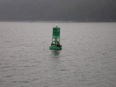 This is a bouy and the Harbor Seals like to redt on them.