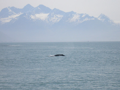 Two whales are in the photo.