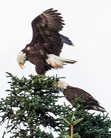 Eagle landing1971cf DEx