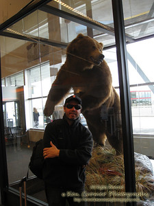 This was in the Anchorage airport and you can get a sense of the size of a Grizzly bear.  This was once a real bear and the sign said it had only been about 5 years old.