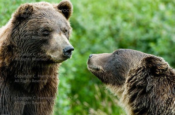 20070805-DSC_1823  Love - Alaskan Style...