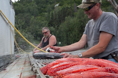 Dip netters on the Copper river cleaning their catch of Red Salmon.