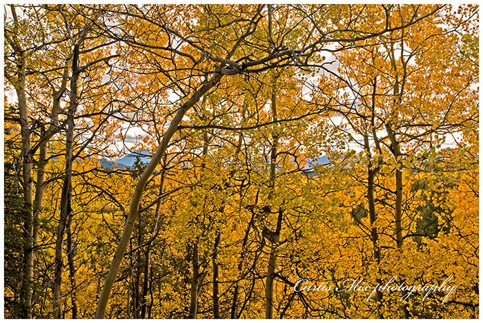Fall #5.