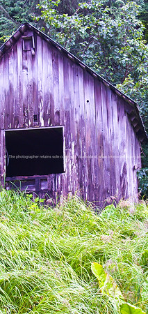 """Section of old shed and grassy foreground, Petersburg, Alaska. SEE ALSO:    <a href=""""http://www.blurb.com/b/893025-north-to-alaska"""">http://www.blurb.com/b/893025-north-to-alaska</a>"""