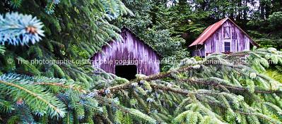Petersburg, Alaska, deserted buildings amongst spruce trees. SEE ALSO:   www.blurb.com/b/893025-north-to-alaska