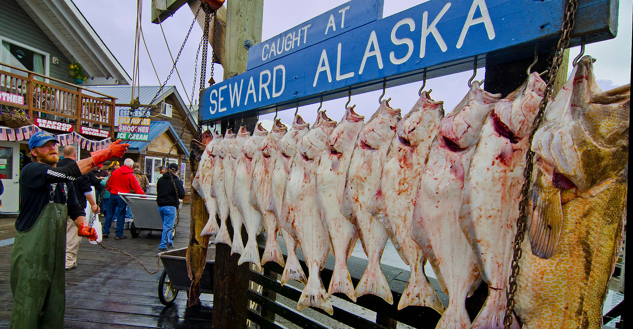 The day's catch, Seward, Alaska.
