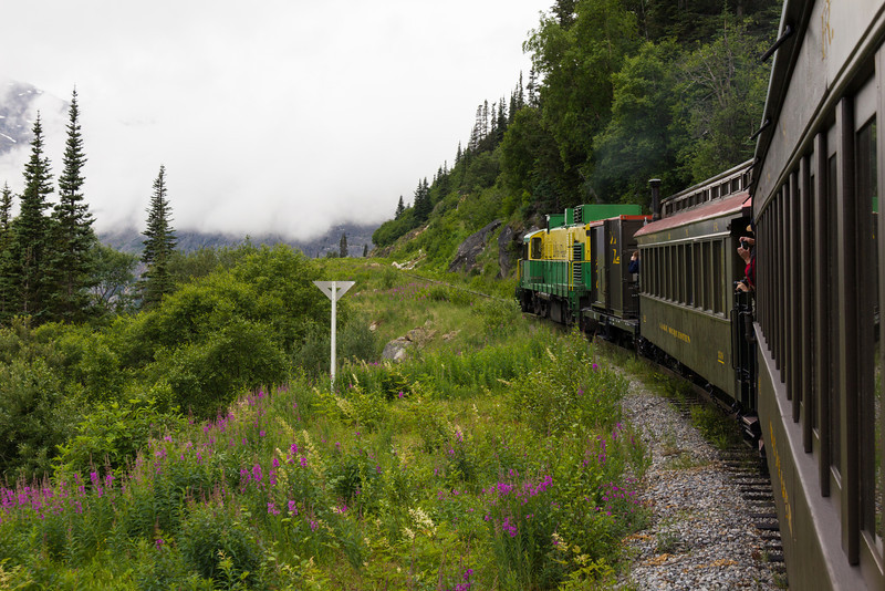 Wild flowers and grasses along the tracks have a short growing season.