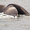"""Whale of a tale. SEE ALSO:    <a href=""""http://www.blurb.com/b/893025-north-to-alaska"""">http://www.blurb.com/b/893025-north-to-alaska</a>"""