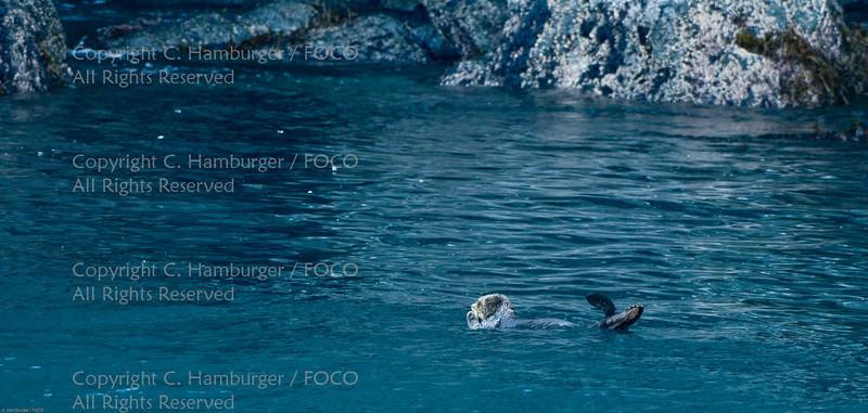 20070807-DSC_2019, Sea Otter - Kenai Fjords Cruise