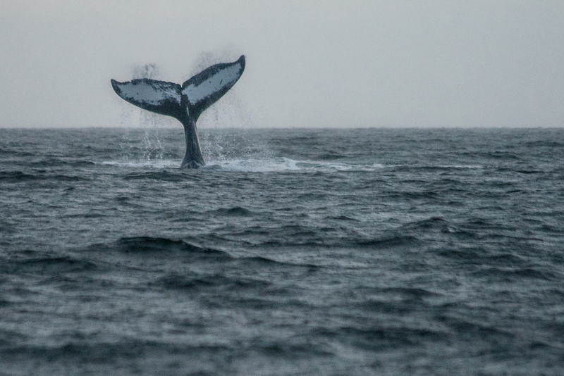 Tails up!  Juneau, Alaska