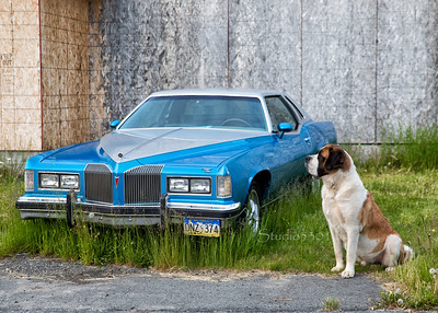 Dog st Bernard guarding Pontiac G AM 1433cf
