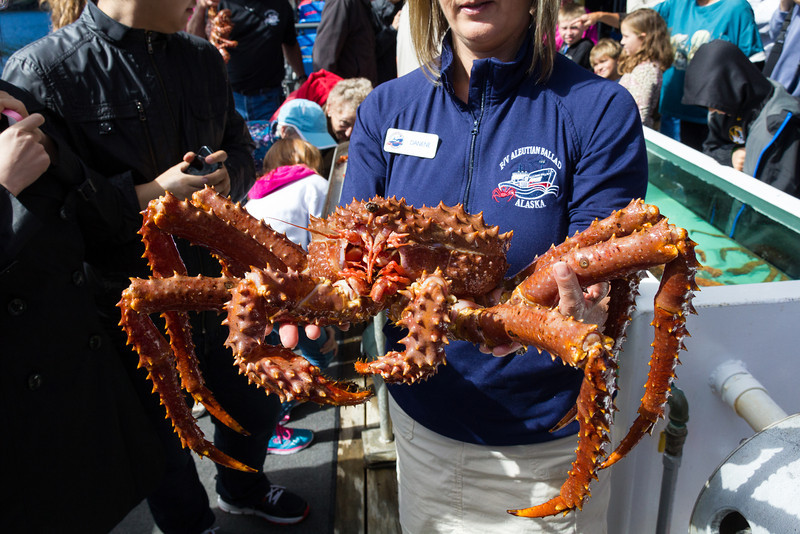 Alaskan King crab. They pulled in dozens of these in a big square trap. Alaska fishing licenses are fixed in number, coveted and very valuable. This ship's license (just the rights) is worth several million should they ever sell it.