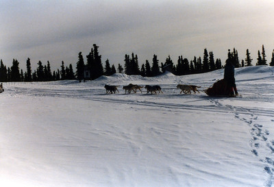 Dog Sledding in the White Mountains north of Fairbanks