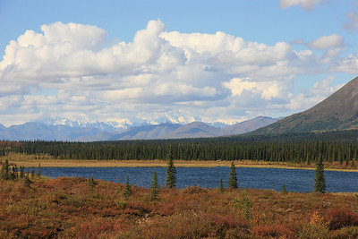 Omgeving Denali National Park, Alaska.