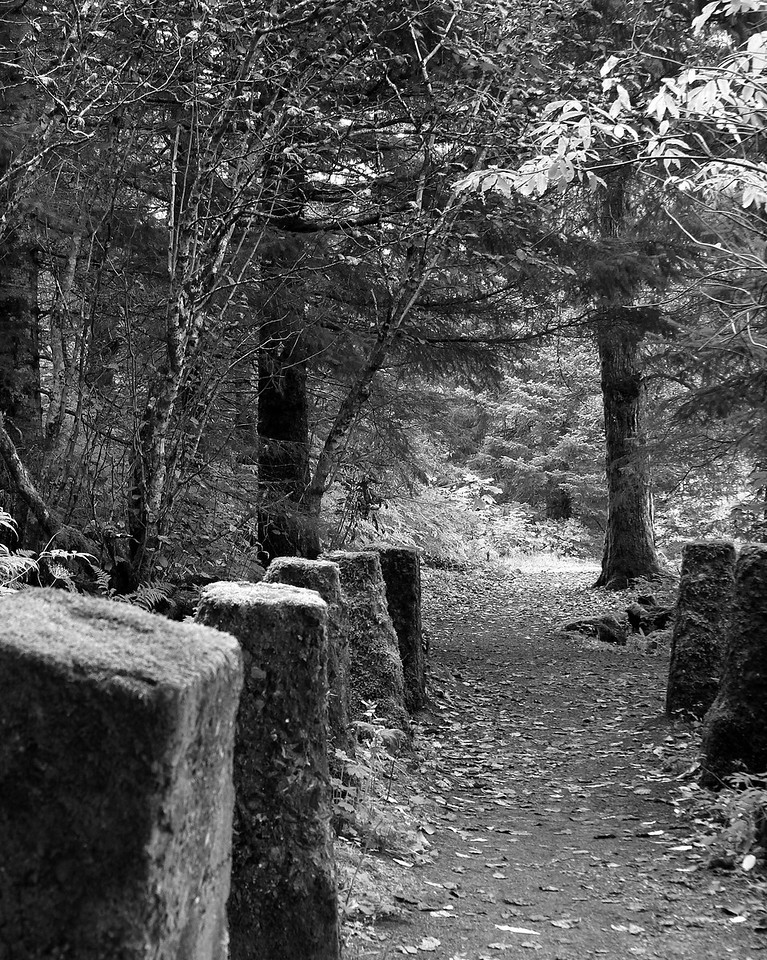 Forest Walk (BW)