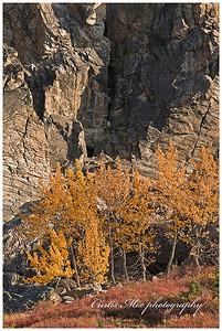 Birch rock.