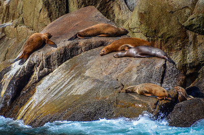 Sea Lions - all excited by the visiting tourists...