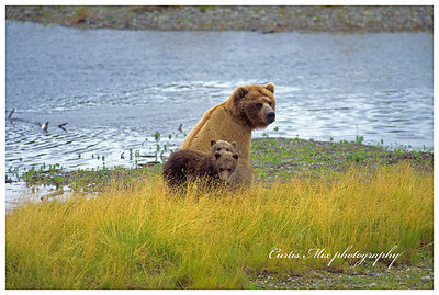Sow and cubs.