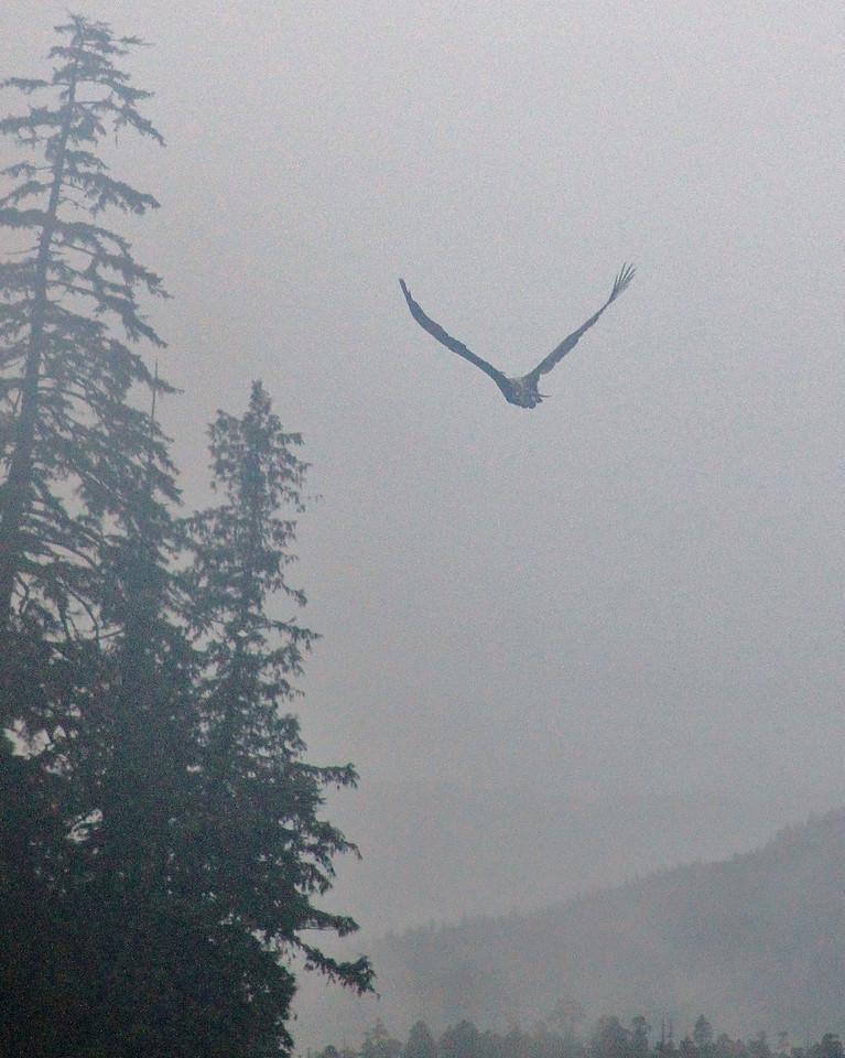 Misty Eagle