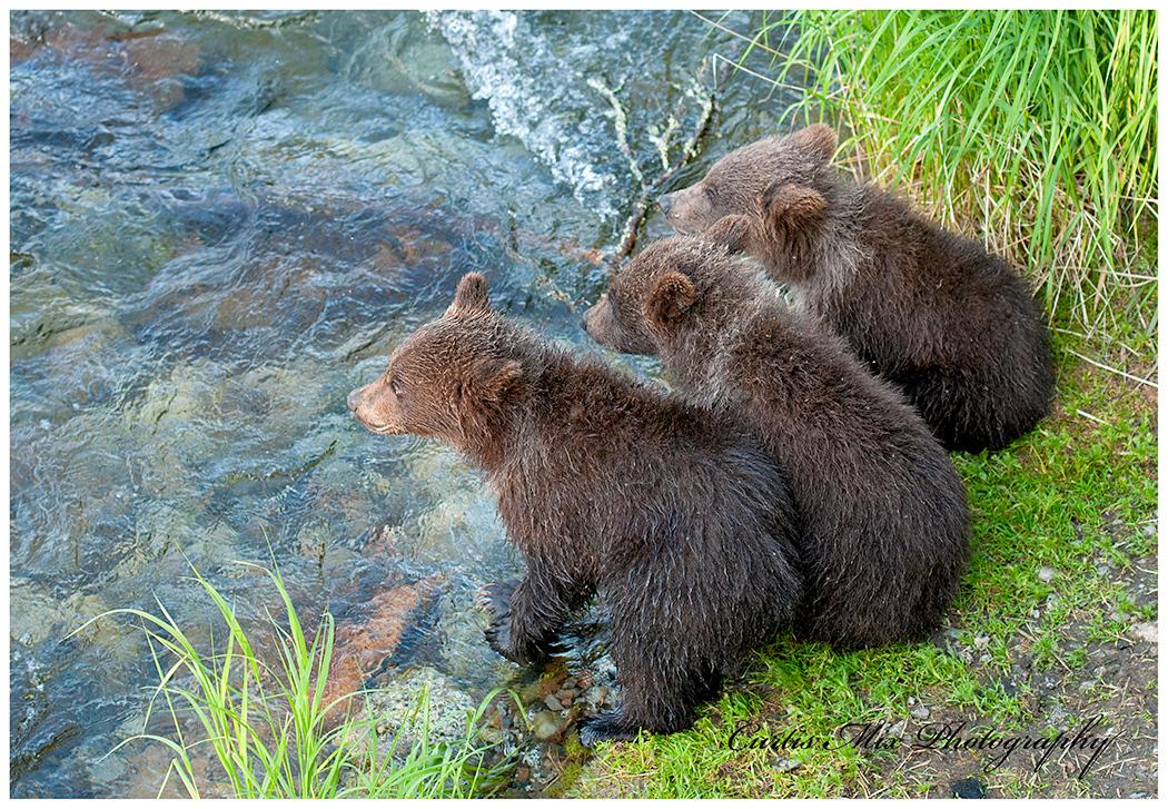 Watching mama fishing.