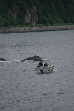 look how close this small boat is to those whales!