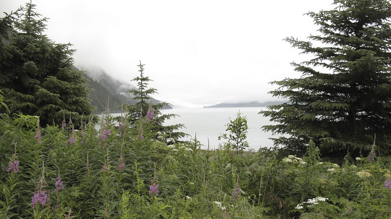 Chilkoot Lake and Fireweed. Took a nice drive in our rented car on Lutak Rd to the turn-a-around point. Haines, Alaska.