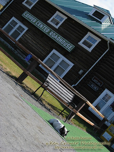 the Copper Center Roadhouse where we stayed our last night before heading back to Anchorage and then home.  This dog is one of the lodge's residents.  When i was packing up my bags in my room i had the door open and i turned around and he was standing there sniffing around.