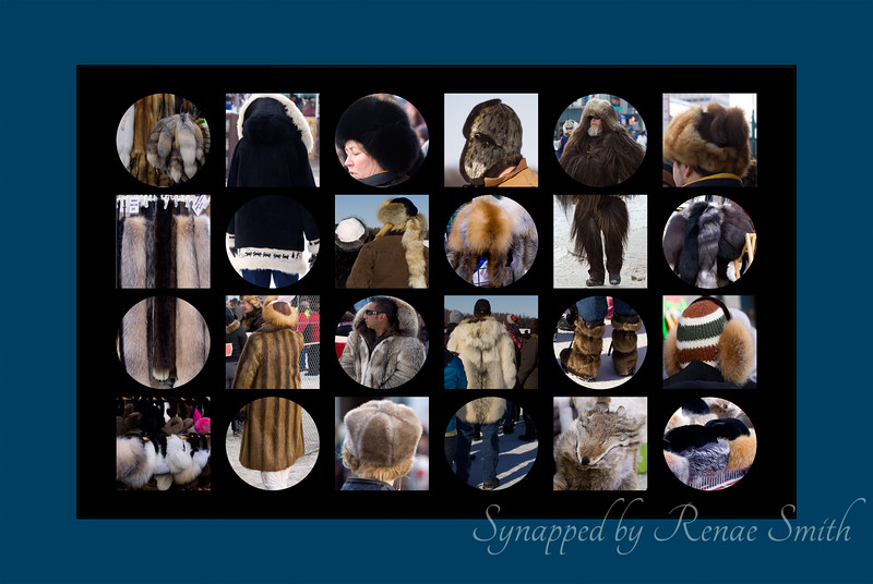 "Alaska Furs  For the week before the Iditarod Anchorage hosts the <a href=""http://www.furrondy.net/index.php?option=com_content&view=article&id=205&Itemid=28"">Fur Rondy</a> (Rendezvous), which commemorates a 3-day festival when the miners and trappers came to town with their winter's yield. Furs were everywhere, mixed with jeans and race-wear!"