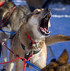 Let Us G-O-O-O-O-O!<br /> <br /> Many of the dogs were howling to get started!