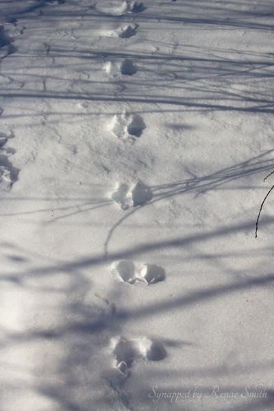 Whose Tracks?