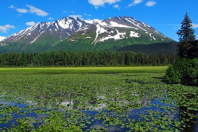 Lily Pond Vista