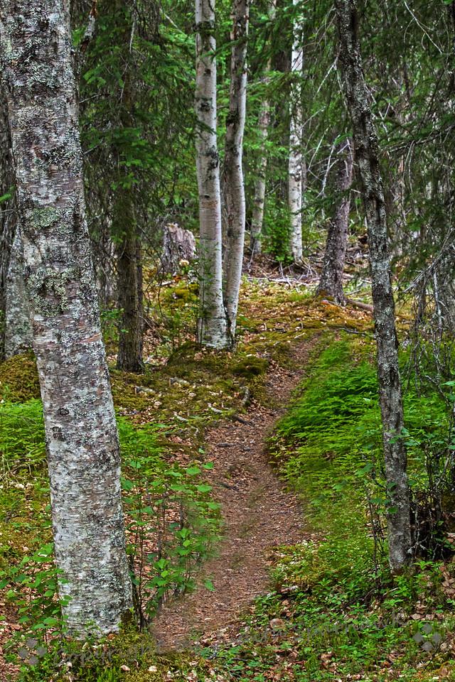 Walk at Moose Creek