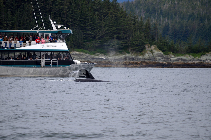 These  two whales very close to that boat.  Boats are supposed to stay 100 yards away from whales!