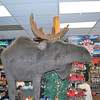 We found our first moose - in a store in Ketchikan...