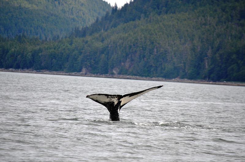Whale diving...