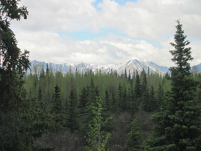 One of several beautiful views of Denali NP.  We had the 5:30 AM bus tour.
