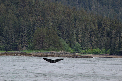 Juneau, AK brought the first of several whale sightings.