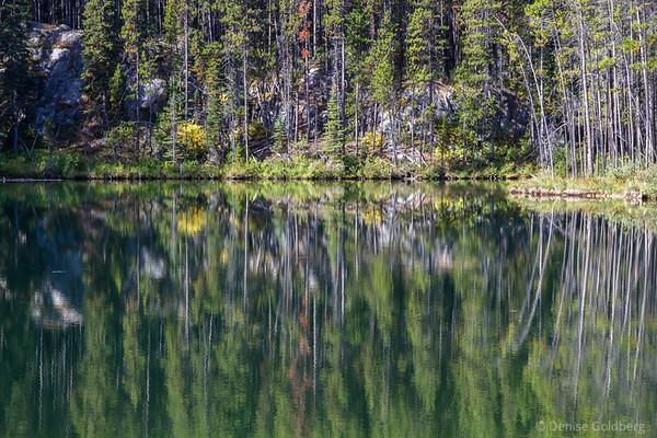 reflections, Lake Herbert