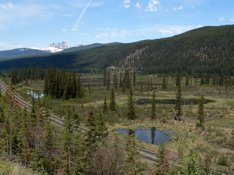 Prime Moose pasture west of Jasper.  That's a hint.  See it?<br /> <br /> 2007-06-01<br /> <br /> .