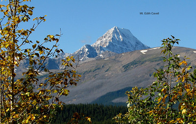 Just south of Jasper. The first colored aspen seen. September 7, 2012