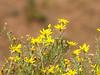 Desert wildflowers.