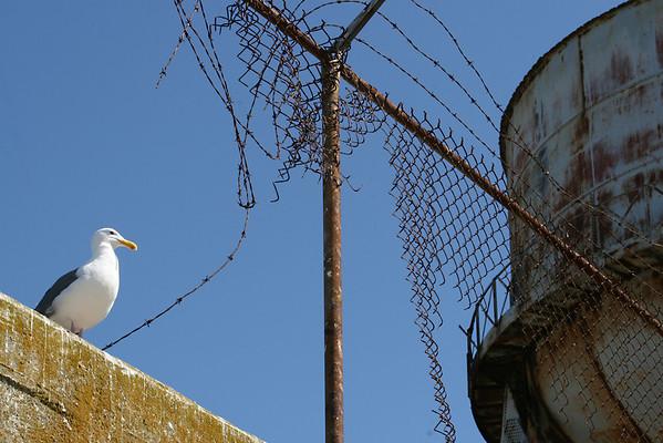 "Alcatraz, ""Island of Sea Birds"""