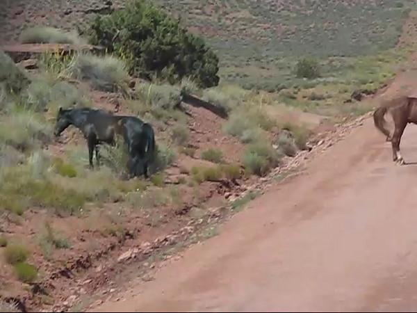 Mineral Bottom Horses