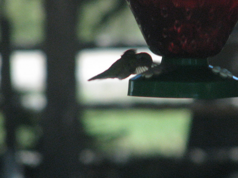 We are now back at the Wildcat Information Center,I was able toget this photo of a Hummingbird at the feeder.